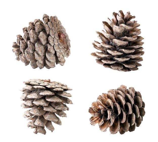Ensemble de cônes d'arbre de noël gros plan isolé.