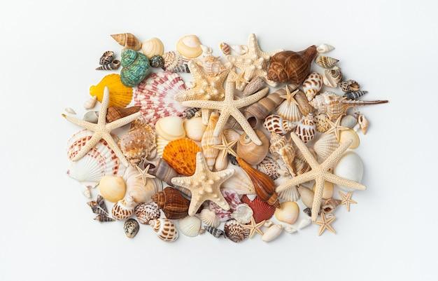 Un ensemble de différentes belles étoiles de mer, coquillages et palourdes sur fond blanc sont rassemblés dans une pile