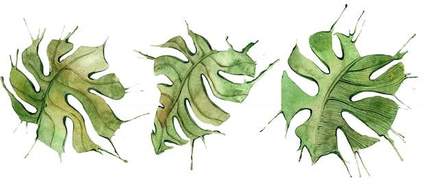 Ensemble de feuilles tropicales. illustrations aquarelle botaniques de la jungle, éléments floraux, feuilles de palmier et autres.
