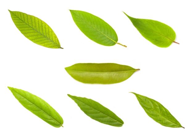 Ensemble de feuilles vertes isolé sur blanc