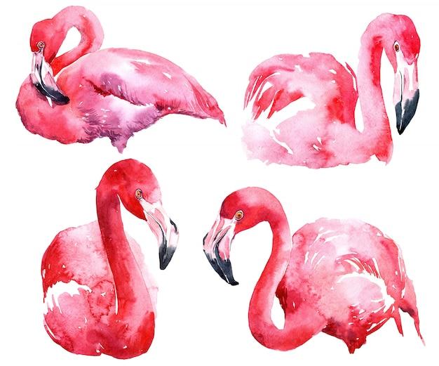 Ensemble de flamant rose aquarelle.