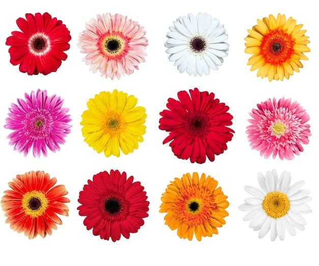Ensemble de fleurs de gerbera