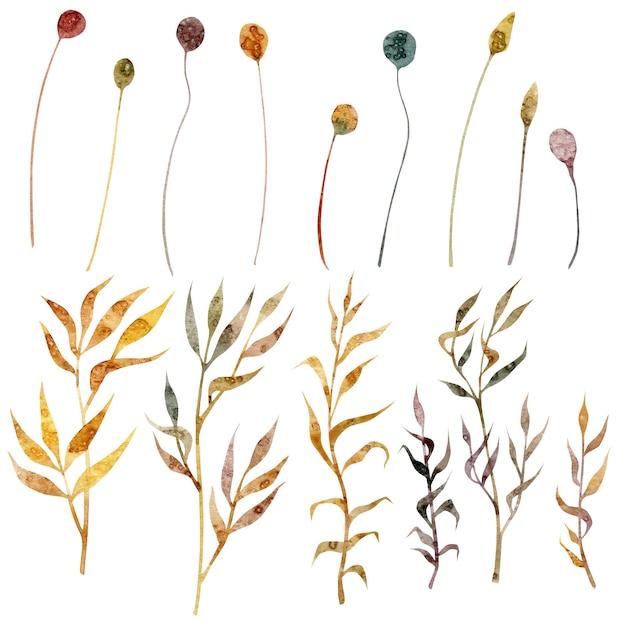 Ensemble floral dessiné à la main à l'aquarelle avec des épillets de blé fleur d'herbe sèche isolé sur fond blanc