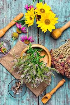 Ensemble d'herbes médicinales