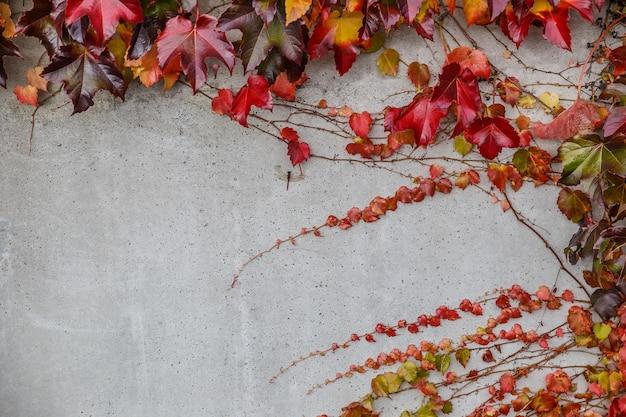 Ensemble de lierre réaliste en automne sur fond de mur en pierre. éléments de design floral pour décorer une carte vintage.
