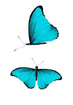 Ensemble de papillons bleus isolés sur fond blanc. photo de haute qualité
