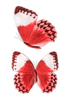 Ensemble de papillons rouges isolés sur fond blanc. photo de haute qualité