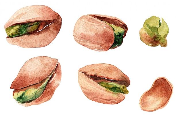 Ensemble de pistaches aquarelles