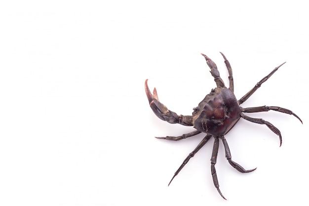 Ensemble de plusieurs crabe noir isolé sur blanc