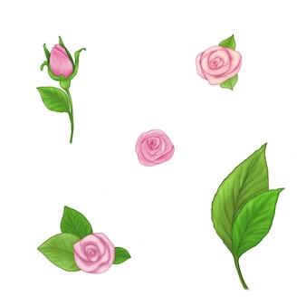 Ensemble de roses roses dessinées à la main avec des feuilles isolées