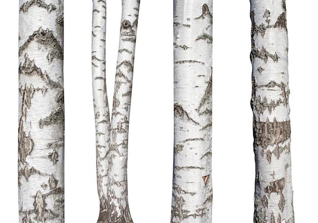Ensemble de troncs de bouleau naturel isolé sur blanc