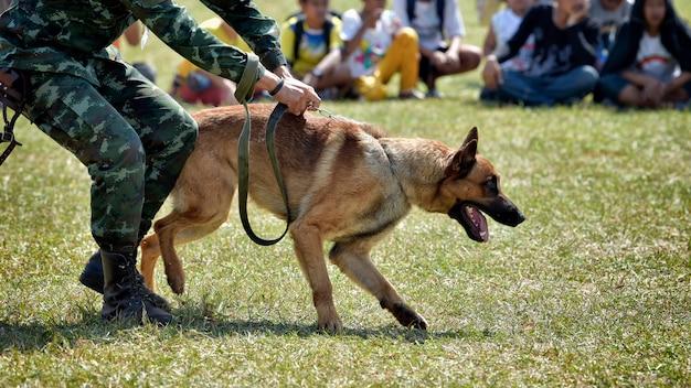 Entrainement de chien