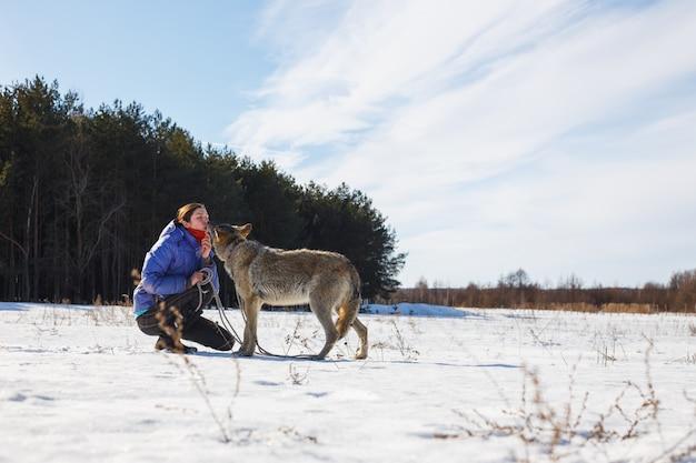 Un entraîneur de fille nourrit un grand loup gris prédateur avec de la nourriture de sa bouche