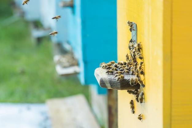 De l'entrée des ruches, les abeilles rampent.