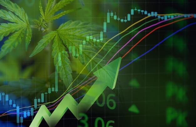 Entreprise de cannabis avec des feuilles de marijuana et des graphiques boursiers sur l'investissement dans l'analyse des échanges boursiers, l'argent de la médecine commerciale du cannabis, la finance de plus grande valeur et les tendances des bénéfices commerciaux à la hausse