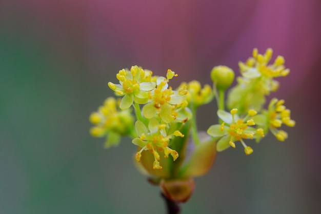 Environnement des arbres en fleurs des bourgeons printaniers,