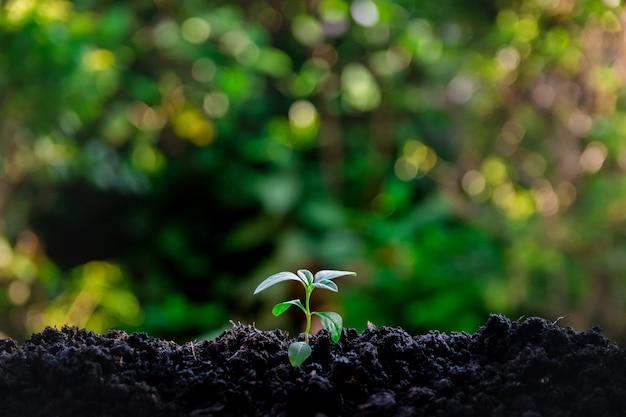 Environnement écologique la croissance des semis