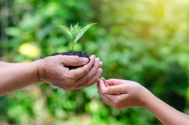 Environnement jour de la terre entre les mains des arbres qui poussent.