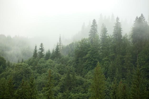 Environnement rural paisible à la lumière du jour