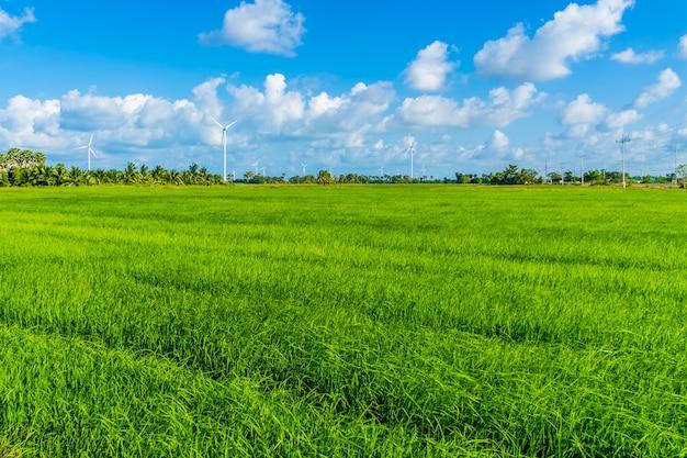 Éoliennes en champ dans le district de hua sai, province de nakhon si thammarat, thaïlande