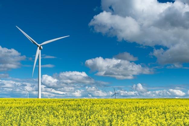 Éoliennes dans un champ de canola en fleurs à l'extérieur de swift current
