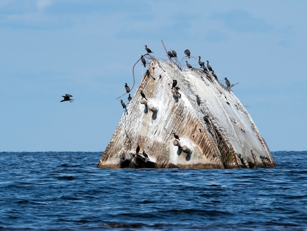 Épave de proue en mer avec des cormorans dessus par une journée ensoleillée