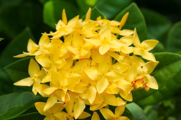 Épi, fleur, jaune, fleur, jaune