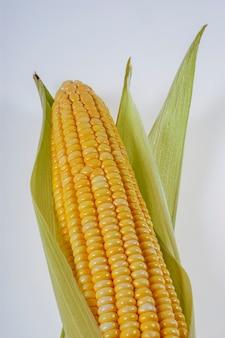 Épi de maïs biologique isolé sur fond blanc.