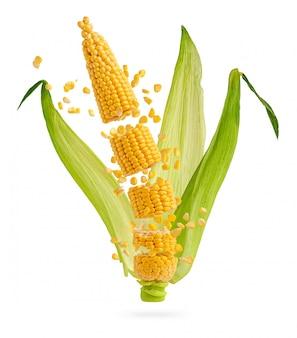 Épi de maïs craquelé avec des grains et des feuilles volants isolés sur blanc. concept de nourriture volante.