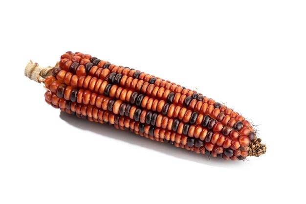 Épi de maïs rouge isolé sur une surface blanche