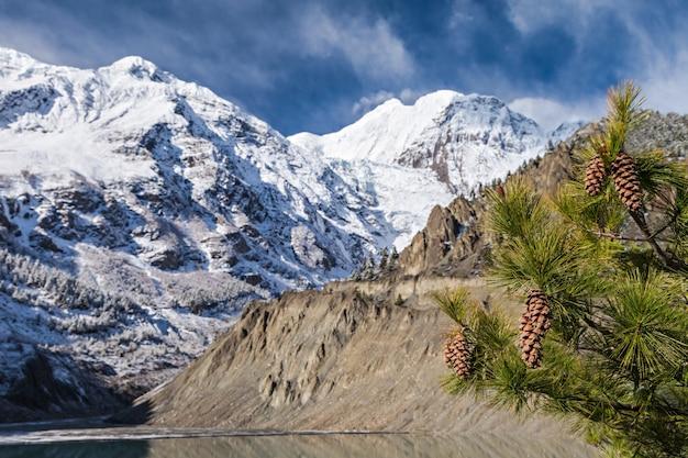 Épicéa avec des cônes et des montagnes