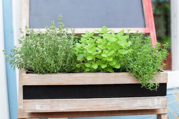 Épices aromatiques poussant dans les plantes d'herbes de cuisine maison sur balcon jardin en pots