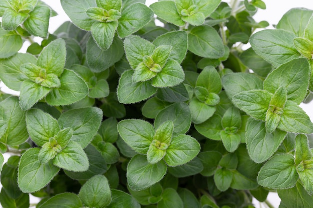 Épices vertes fraîches sur tableau blanc