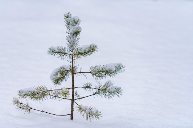 Épinette de la cime des arbres sur la neige. fortes chutes de neige, mauvaise visibilité et conditions météorologiques hivernales.