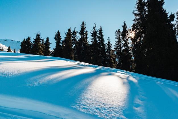 Épinette verte sur fond de ciel bleu grande ombre à huis clos ciel clair lever du soleil d'hiver