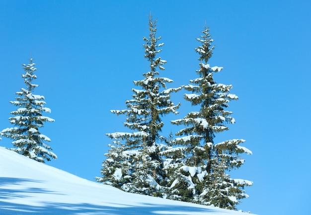 Épinettes d'hiver sur le versant de la montagne sur fond de ciel bleu.