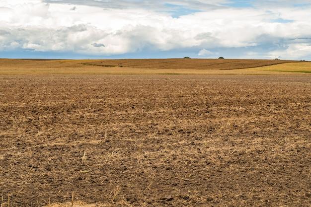 Épis de blé cultivés sur le terrain agricole
