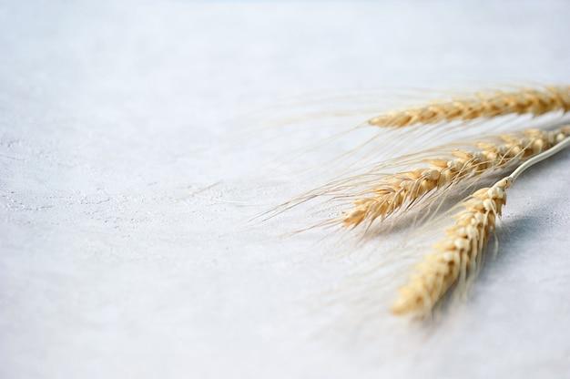 Épis de blé sur gris