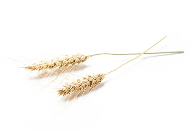 Épis de blé isolés sur blanc