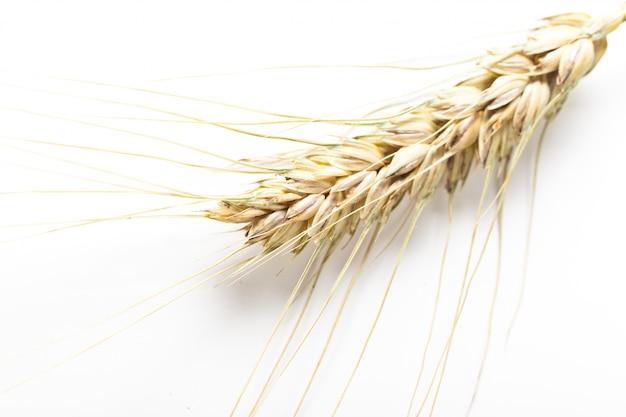 Épis de blé isolés sur fond blanc