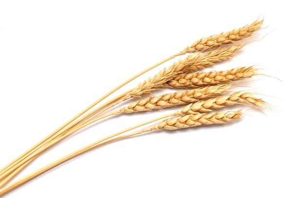 Épis de blé secs isolés sur blanc