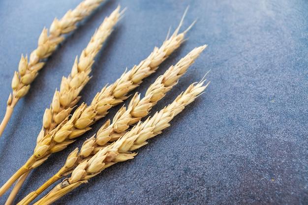 Épis de blé et seigle sur fond bleu foncé. vue de dessus, mise à plat, espace de copie. composition d'automne, concept de récolte