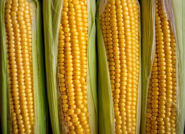 Épis de maïs frais, gros plan. épis appétissants de maïs jaune mûr avec des feuilles vertes vue de dessus. alimentation biologique, mode de vie sain