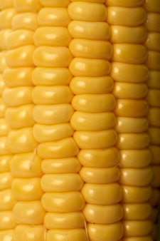 Épis de maïs sucré avec des coques