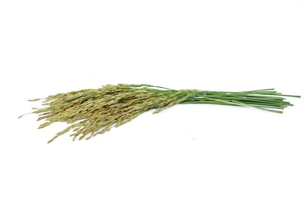 Épis de riz sur fond blanc