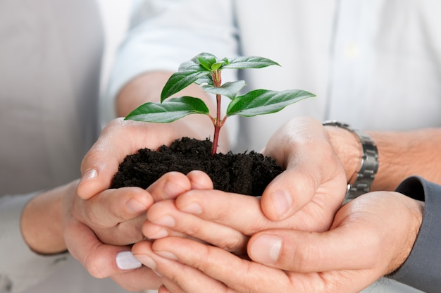 Équipe commerciale tenant ensemble un gros plan de germes verts frais