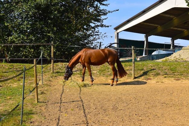 Équitation à la campagne
