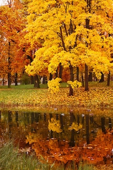 Érables d'automne colorés dans le parc