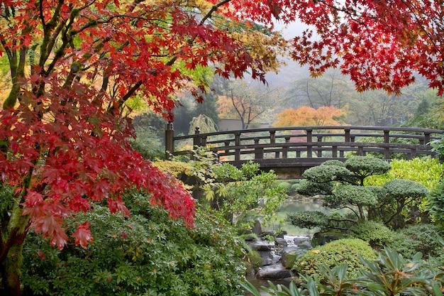 Les érables japonais au bord du pont en automne