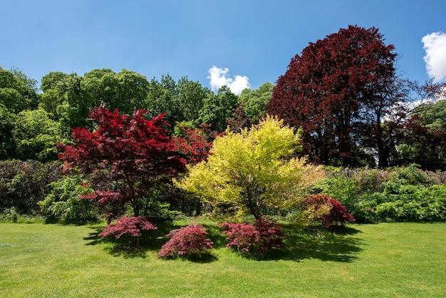 Érables japonais rouges et dorés d'ornement dans un jardin à la française sur fond d'arbres boisés par une journée d'été ensoleillée avec ciel bleu